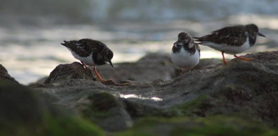 Birds - Santander, Spain (2015)